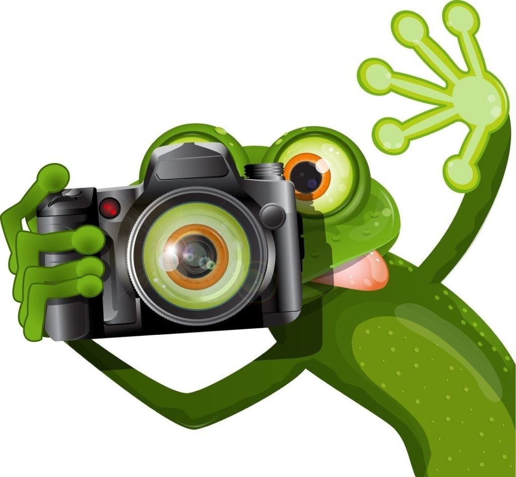 19656240 - illustration merry green frog with a camera